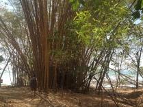 Bambus Cabo Blanco