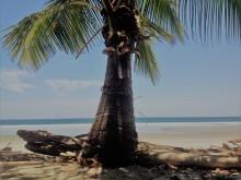 Playa Grande bei Montezuma