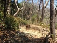 Susanne im trockenen Wald