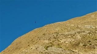 hoch oben: ein Kondor!!!